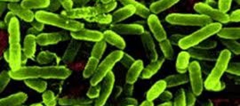 Probiotic và những điều cần biết